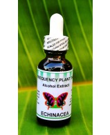 Echinacea Alcohol Extract - 1oz