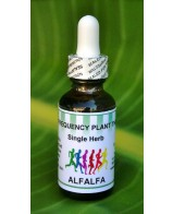 Alfalfa Single Herb - 1 oz
