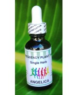 Angelica / Dong Quoi - Single Herb - 1 oz