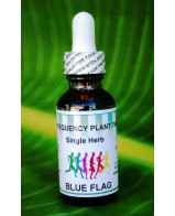 Blue Flag Single Herb - 1 oz