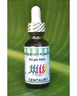 Centaury Single Herb - 1 oz