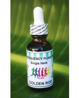 Golden Rod - 1oz