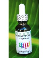 Horsetail/Shavegrass - 2oz