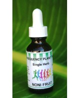 Noni Fruit Morinda - 2oz