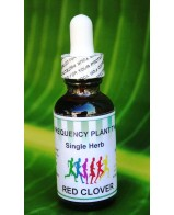 Red Clover - 1oz