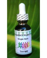 Thyme Single Herb - 1oz