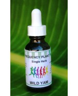 Wild Yam Single Herb - 1oz